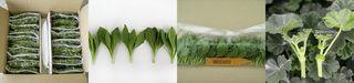 <br><br>Savanna Flowers products range